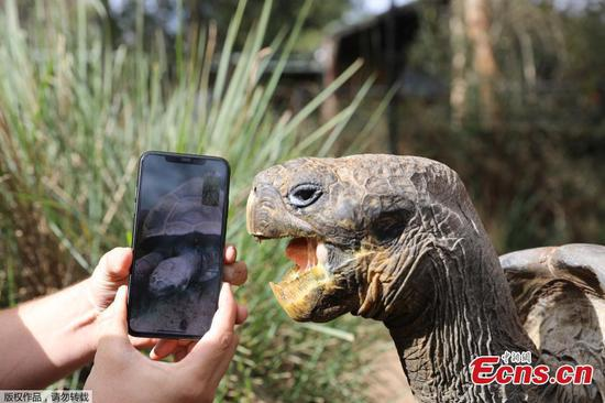 Endangered Galapagos tortoises have first date Virtually
