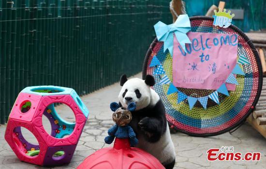 Shenyang zoo celebrates 7th birthday for giant panda Bing Qing
