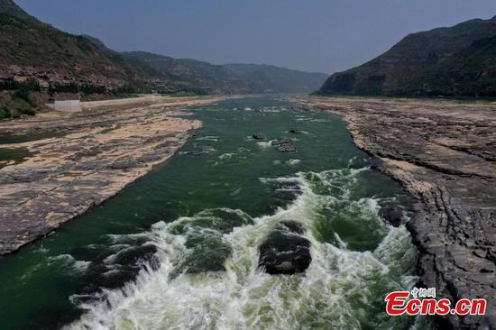 Hukou Waterfall of the Yellow River turns green in N China's Shanxi