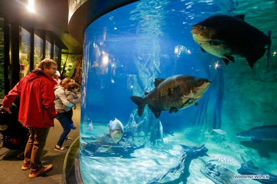 Vancouver Aquarium reopens to public