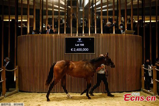 A thoroughbred mare sells for $2.8 million at auction in France