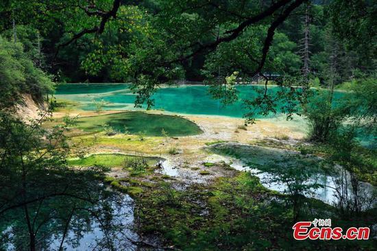 Nen Ensangcuo: fairyland hides in Sichuan's Jiuzhaigou
