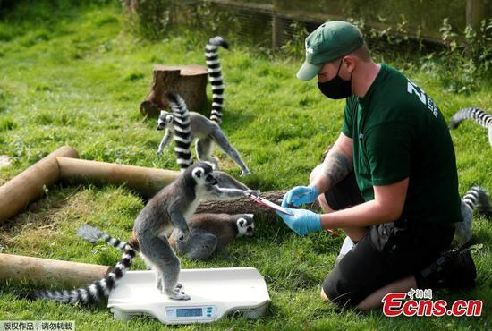 ZSL Whipsnade Zoo launches annual animal weigh-in and measurement activity