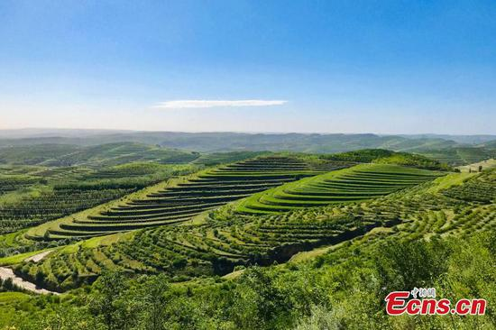 Terrace fields in Ningxia form spectacular scenery in early autumn