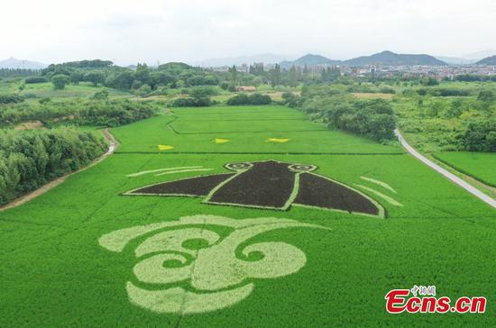 Rice paddy art pictures in Hangzhou present ancient Liangzhu culture