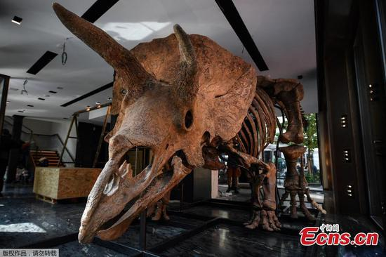 World's largest triceratops fossil 'Big John' to be auctioned in Paris