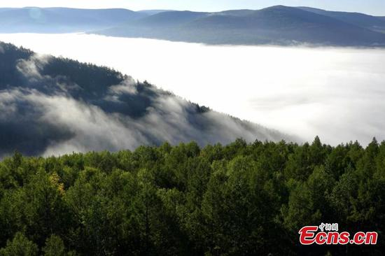 Spectacular sea of clouds hover over Inner Mongolia park