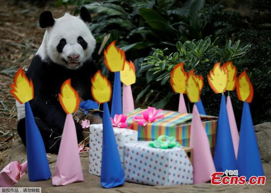Giant panda in Singapore welcomes 14 years old birthday