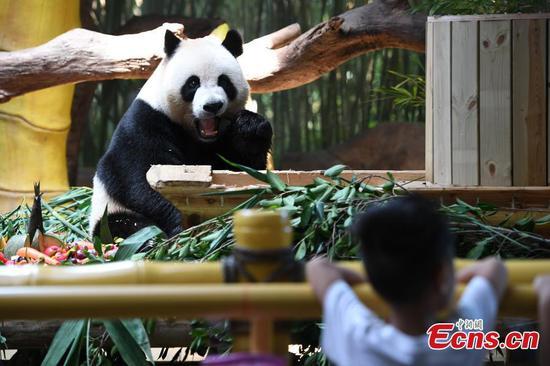 Giant panda triplets eat mooncakes to celebrate Mid-Autumn Festival