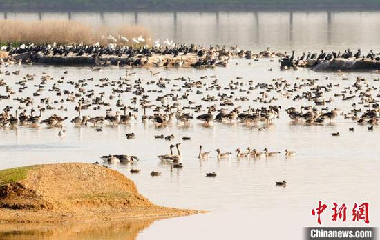 Central China's Wuhan to build 80 wetland parks over 5 years