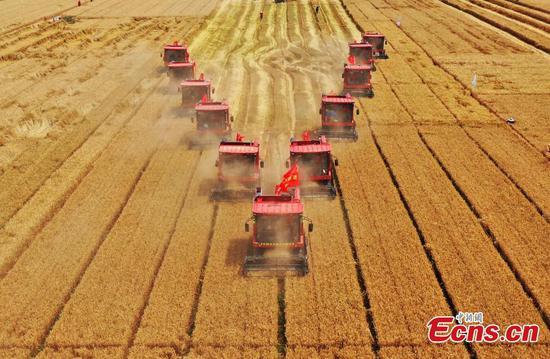 Chinese Farmers' Harvest Festival: Bumper harvest nationwide