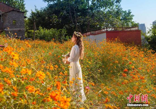 Chongqing's old residential area rehabilitated with golden sea of coreopsis