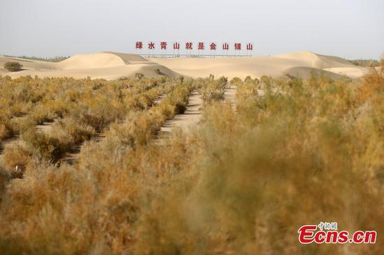 Ecological project turns desert into oasis in Xinjiang's Makit