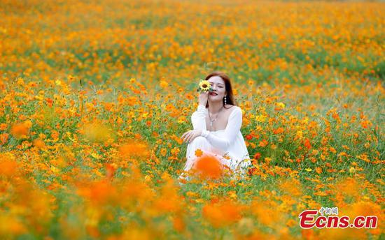 Tourists immerse in golden sea of cosmos flowers in Wuhan