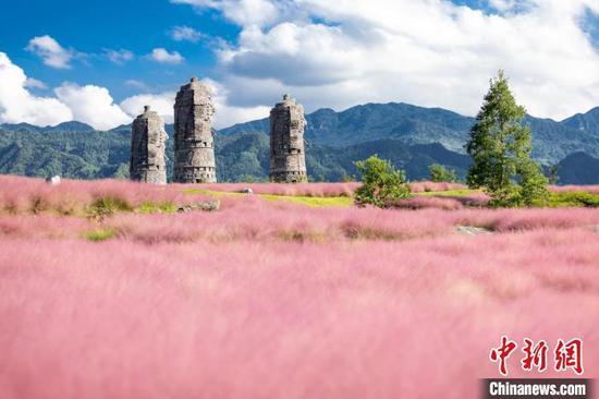 Dreamlike pink flowers appear in Chongqing