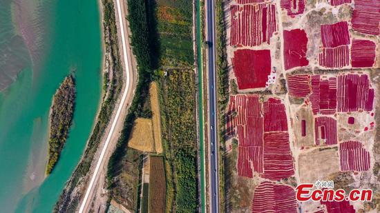 Chili peppers dried in China's Xinjiang