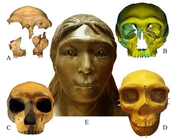Skull restoration shows evidence of human evolution 300,000 years ago
