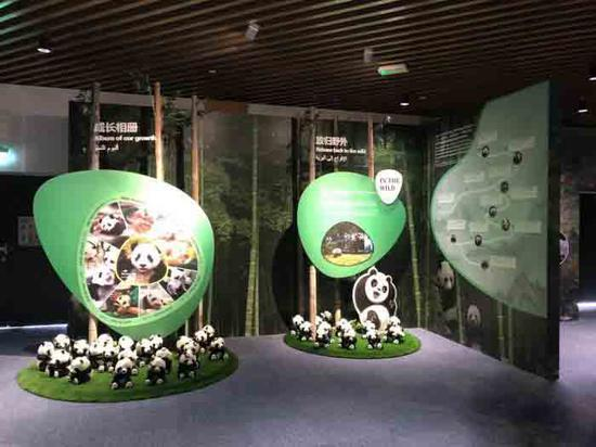 China's Panda-conservation show unveiled at Expo 2020 Dubai