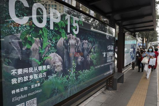 COP15 meeting to kick off in SW China's Kunming City