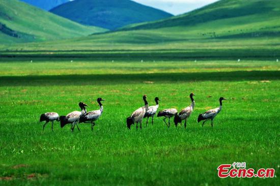 Biodiversity in China