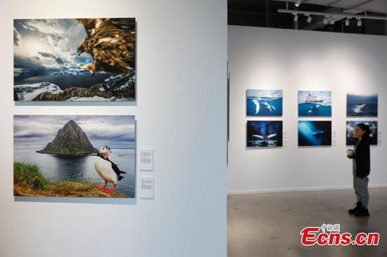 'Born to Be Wild' photography exhibition opens in Kunming