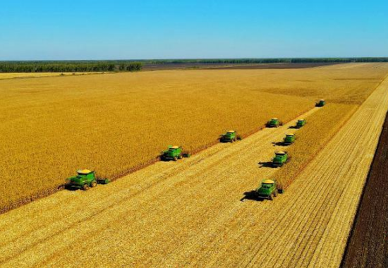 Total grain output of Chinese agricultural giant to exceed 23 mln tons