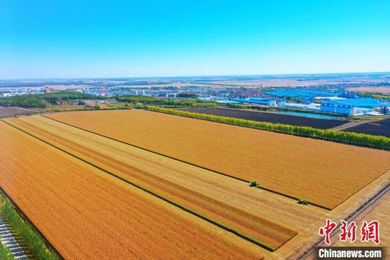 The harvest scene of Beidahuang Group. (Photo: China News Service/Zhang Ping).