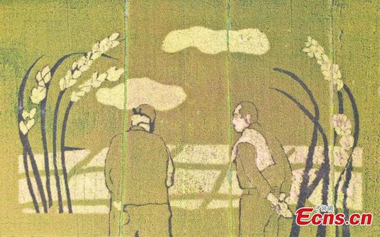 Golden paddy field paintings show harvest scenes in Hangzhou