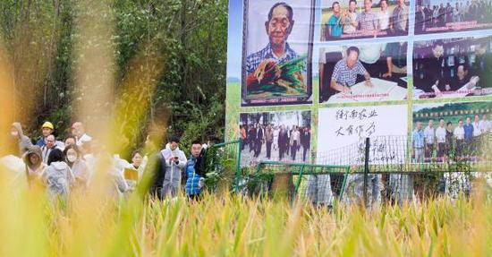 Third-generation hybrid rice yield reaches record high