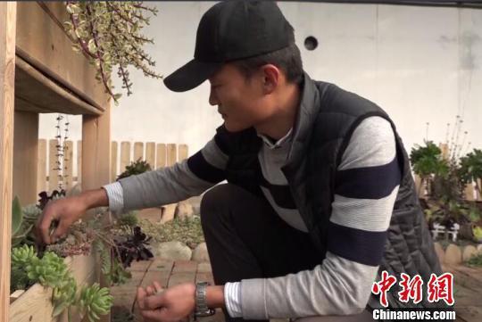图为钱俊魁在悉心照料多肉植物。 赵雅敏 摄