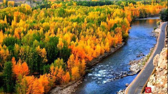 哈巴河白桦林国家森林公园。图/阿勒泰地区旅游局