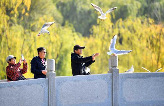 市民争相为远道而来的红嘴鸥喂食、拍照。