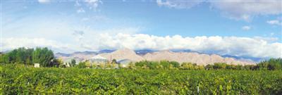 <p>  贺兰山脚下的宁夏贺兰晴雪酒庄,葡萄树枝蔓成荫。(均资料图片)</p><p>