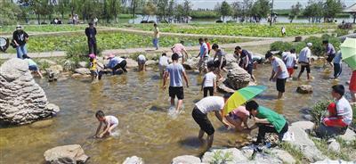在鸣翠湖国家湿地公园,游客玩摸鱼游戏。