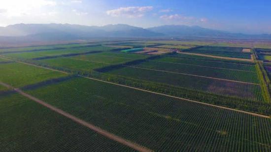中国葡萄酒从贺兰山东麓走向世界|闽商陈德启的红酒情怀(图1)