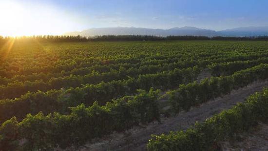 中国葡萄酒从贺兰山东麓走向世界|闽商陈德启的红酒情怀(图2)