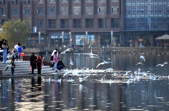 阳光明媚,海宝公园的湖面上红嘴鸥漫天飞舞。