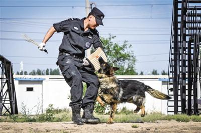 <p>  张宸源在训练警犬。(图片由受访者提供)</p>