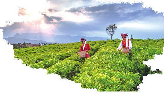 绿意融融茶飘香。