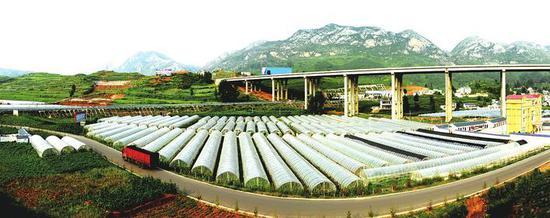 蔬菜产业带民富。