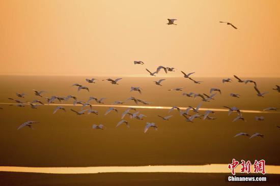 鄱阳湖冬日鹭影和谐如画