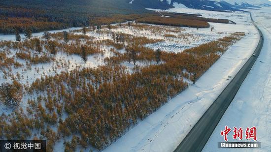 """(图文无关)2017年10月8日,国庆中秋期间的那场降雪,让天山披上银装,大地一片素洁。穿越天山的S303省道,成""""最美""""公路,一边是天山雪岭云杉,如火苗一样挺立在冰清玉洁之中,一边是被皑皑白雪覆盖的大草原,S303像一条巨龙一样蜿蜒在冰雪组成的海洋中,风光旖旎。 孙继虎 摄 图片来源:视觉中国"""