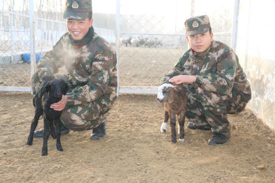 图为官兵们正在精心照料小羊羔。