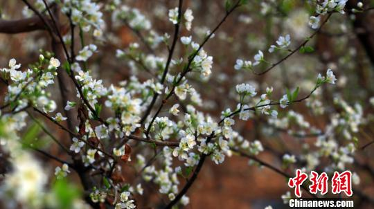 新疆托克逊冬日温室鲜花盛开