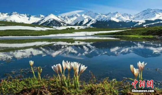 """新疆""""空中草原""""那拉提绝美野百合破冰而出"""
