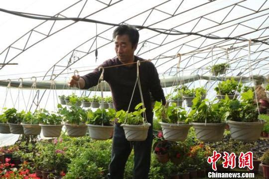 新疆兵团职工转变观念规模化种植大棚花卉增收