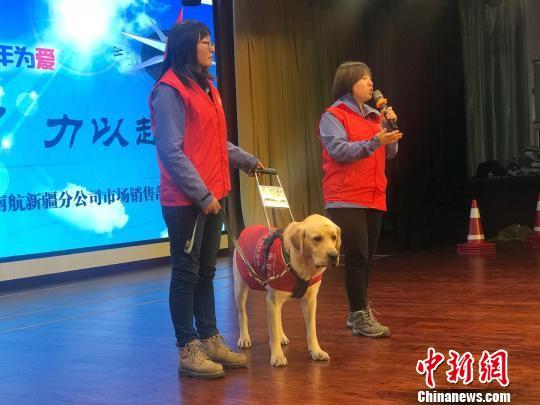 导盲犬首搭班机到新疆参加公益活动