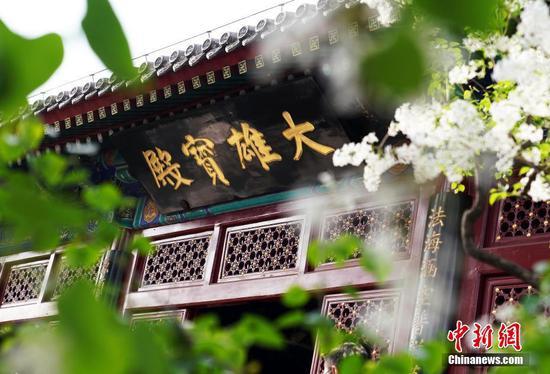 北京法源寺丁香盛开