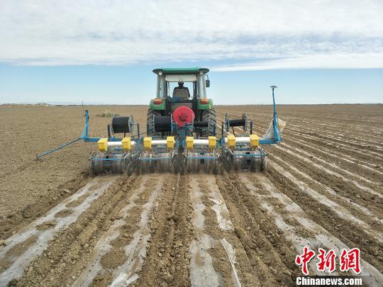 """新疆兵团连队沙漠深处打造""""万亩有机农业示范区"""""""