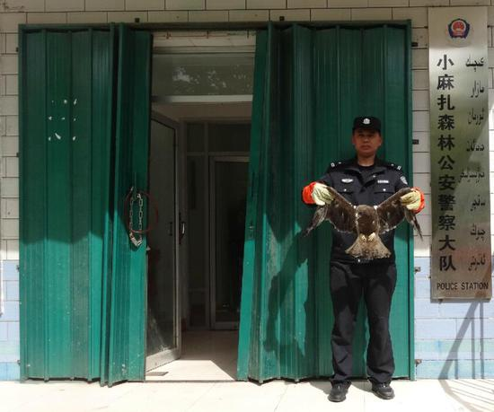 新疆:森林公安警察大队成功救助一级保护动物金雕。